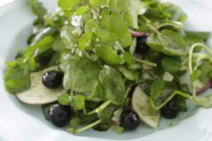 Watercress berry salad